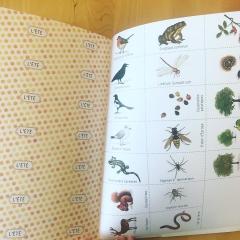 cahier, qautre, saisons, découvre, nature, autour, toi, françois, lasserre, isabelle, simler, colibris, nathan
