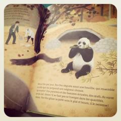 yen-yen,histoire,vraie,panda,géant,fred,bernard,julie,faulques,nathan